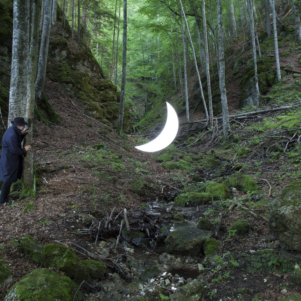 Beech forest_IMG_8964